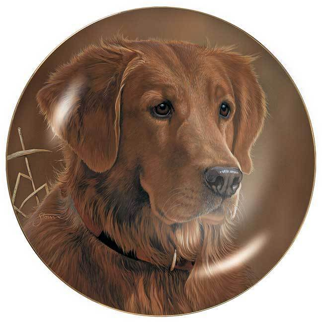 Sporting Dogs—Golden Retriever