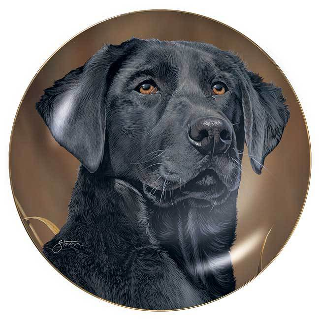Sporting Dogs—Black Lab