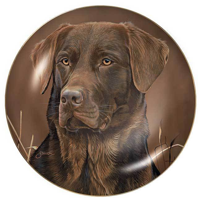 Sporting Dogs—Chocolate Lab.