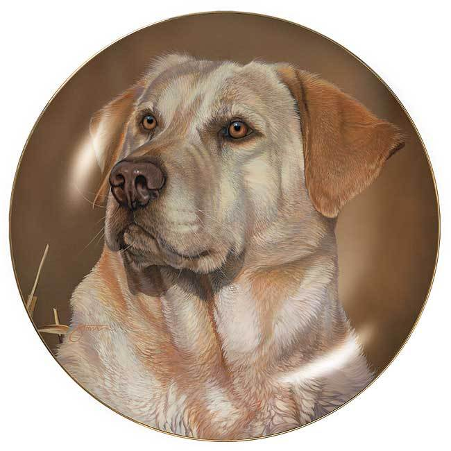 Sporting Dogs—Yellow Lab