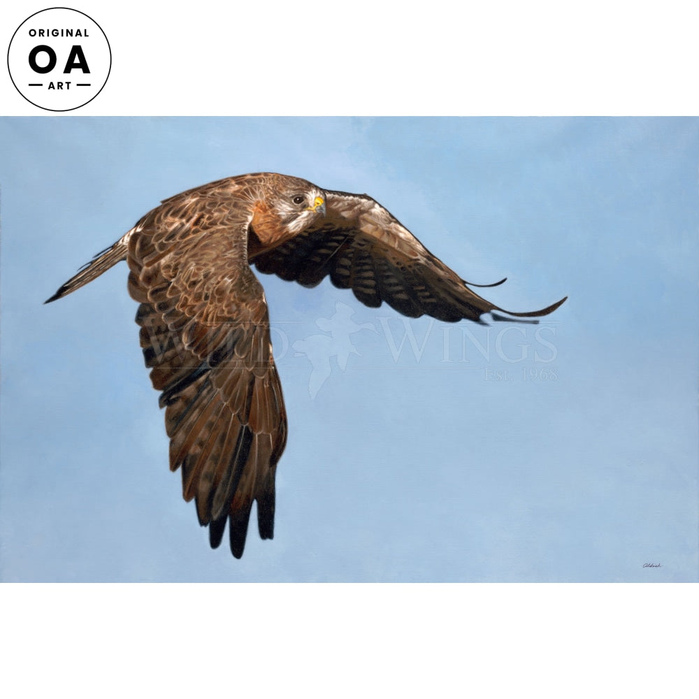Wingman—Swainson's Hawk Original Art