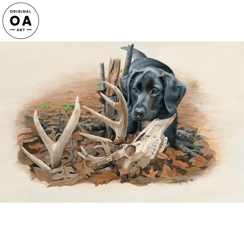 Beginner's Luck—Black Lab Pup with Antlers and Skull.