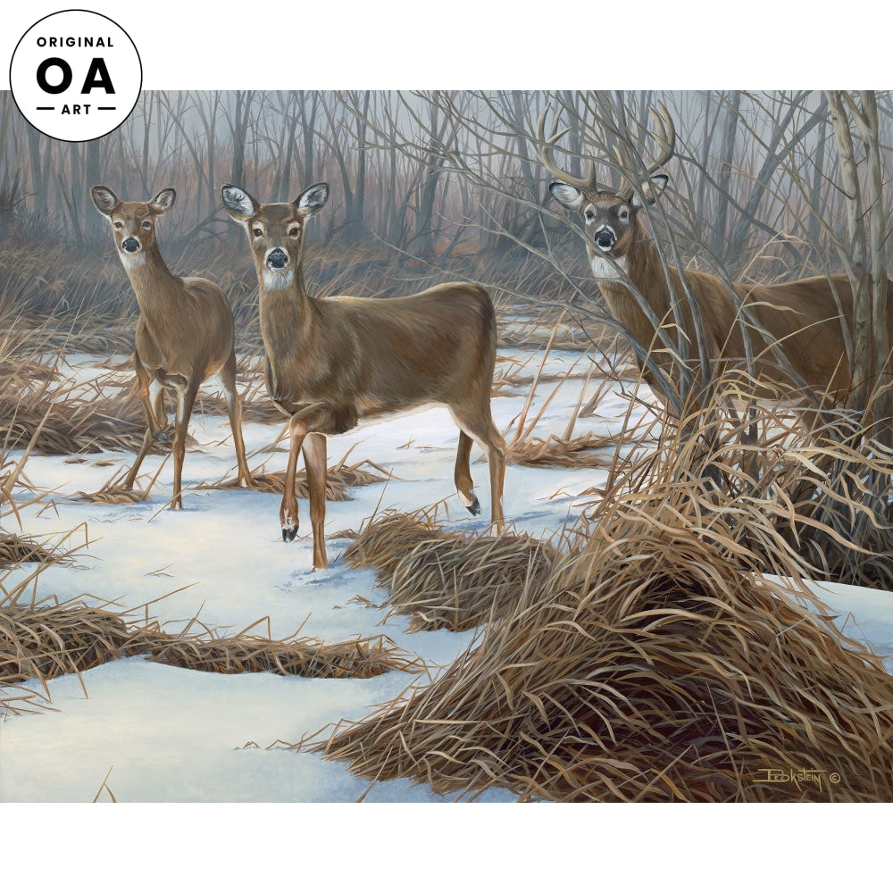 Double Date for Eight—Whitetail Deer.