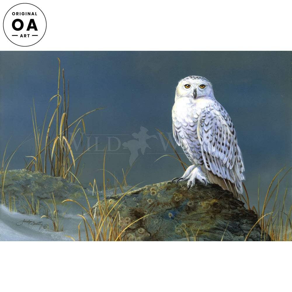 Snowy Owl Original Art
