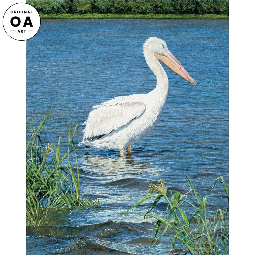 Backwater—Pelican.