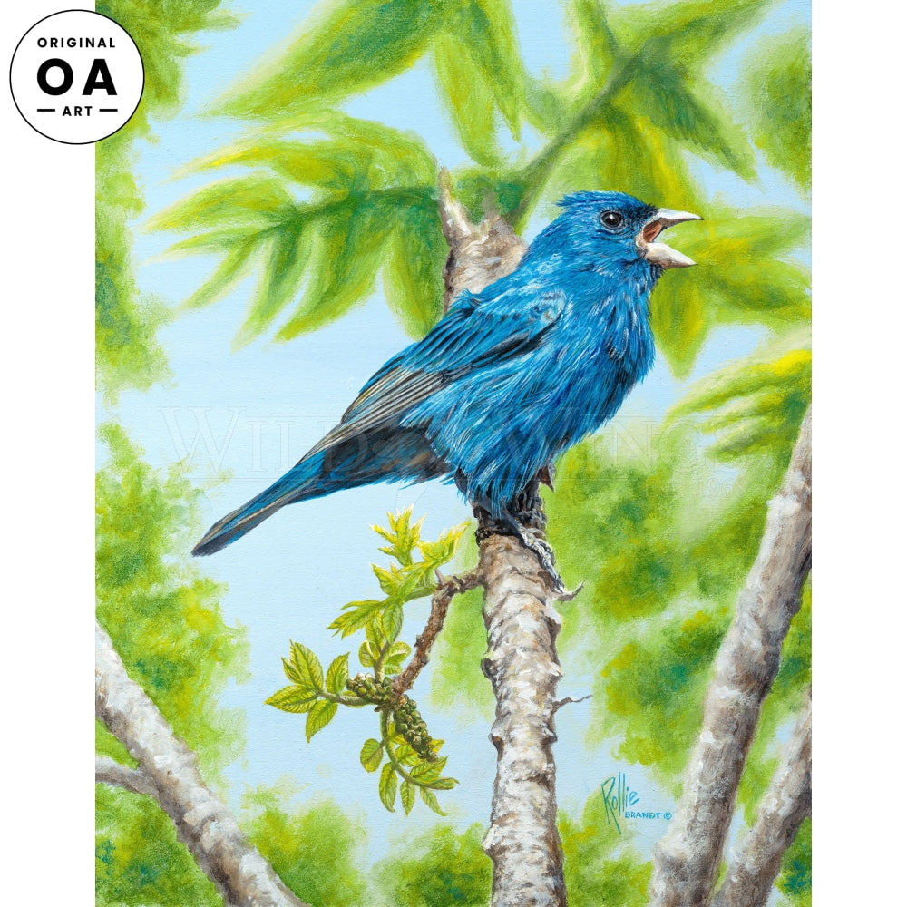 Out of the Blue—Indigo Bunting.