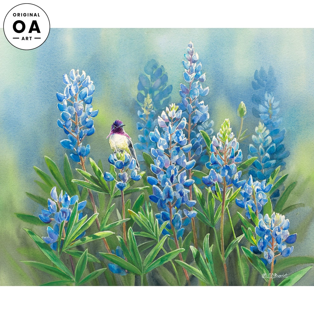 Costa's in Bluebonnets—Hummingbird.