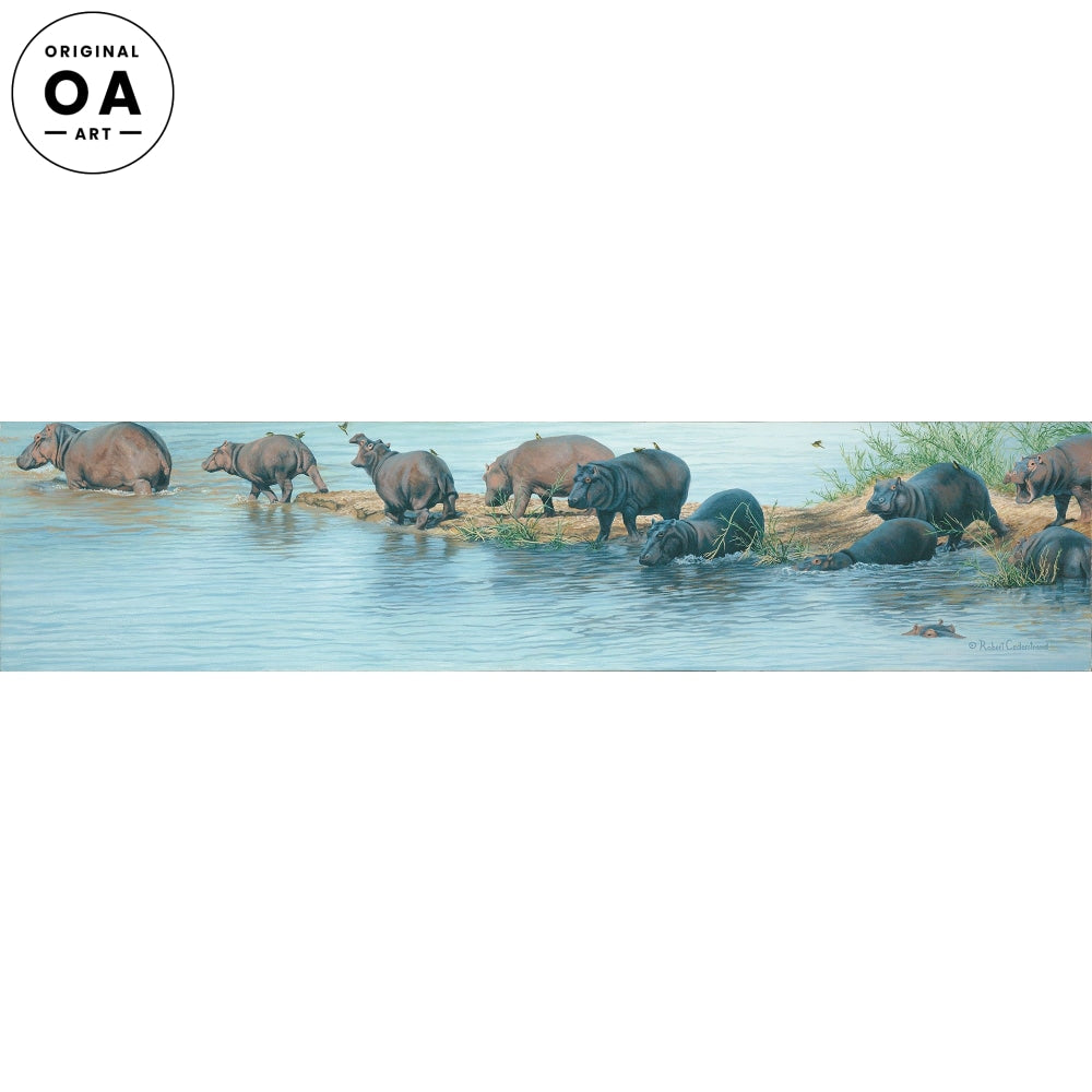 Hippos on the Zambezi.