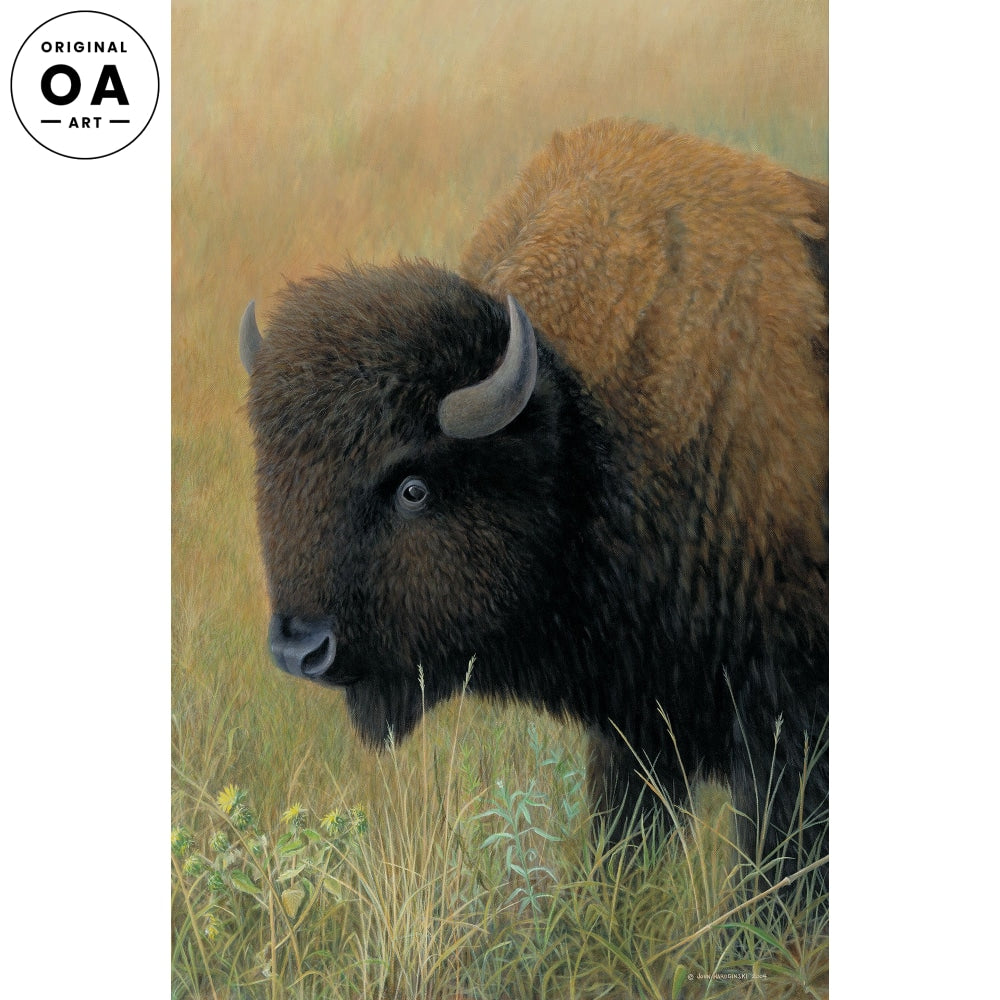 Soul of the Prairie—Bison.