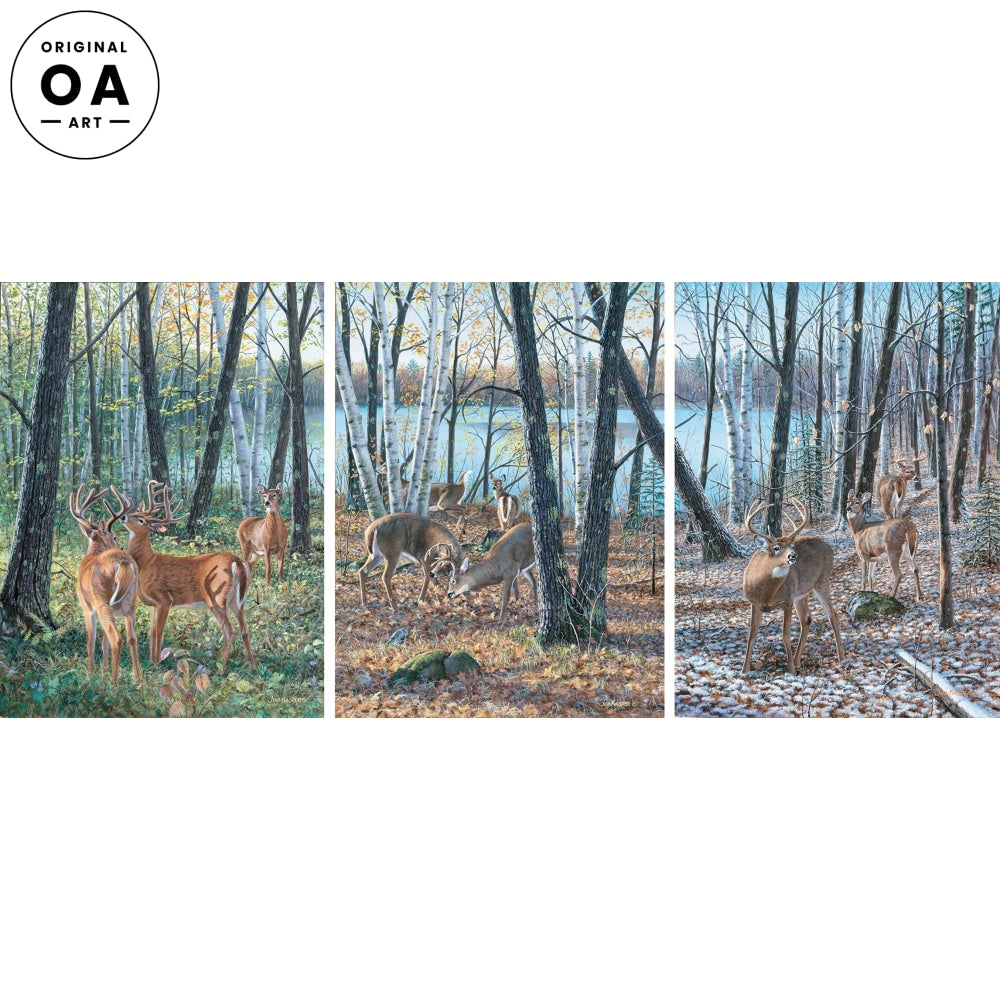 Seasons of the Woods—Whitetail Deer.