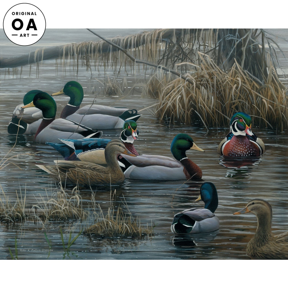 <i>Mallards & Wood Ducks</i> Original Artwork