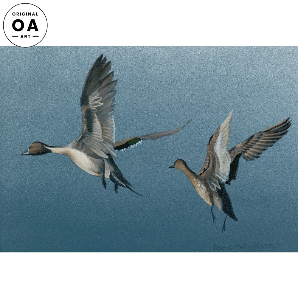 <i>Northern Pintails Miniature</i> Original Artwork