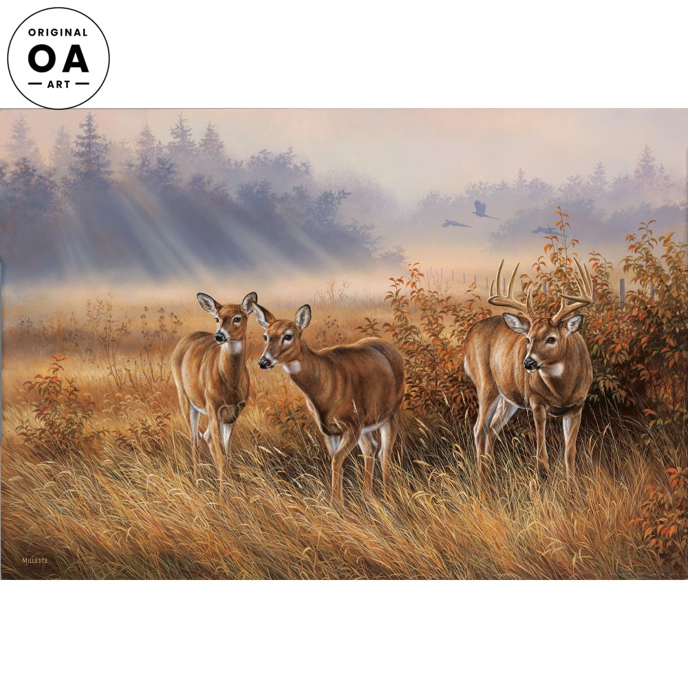 Meadow Mist—Whitetail Deer.
