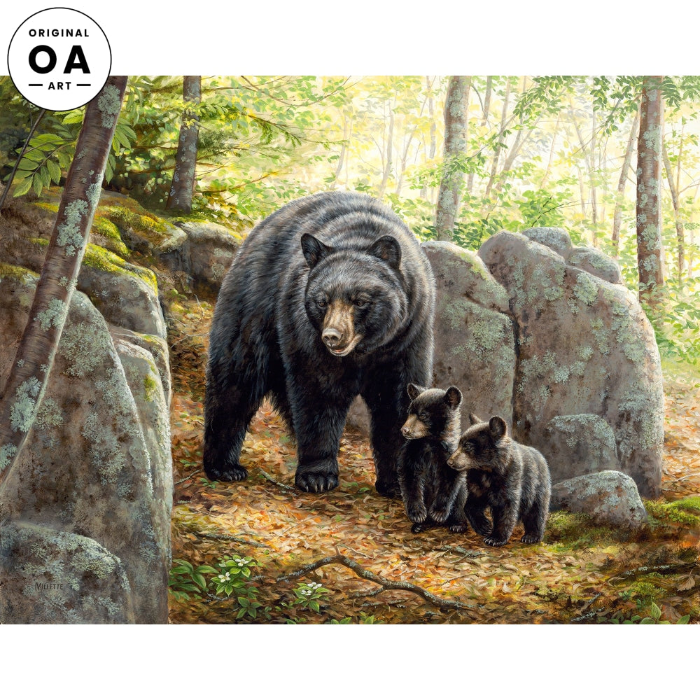 Northwoods Springtime—Black Bears.