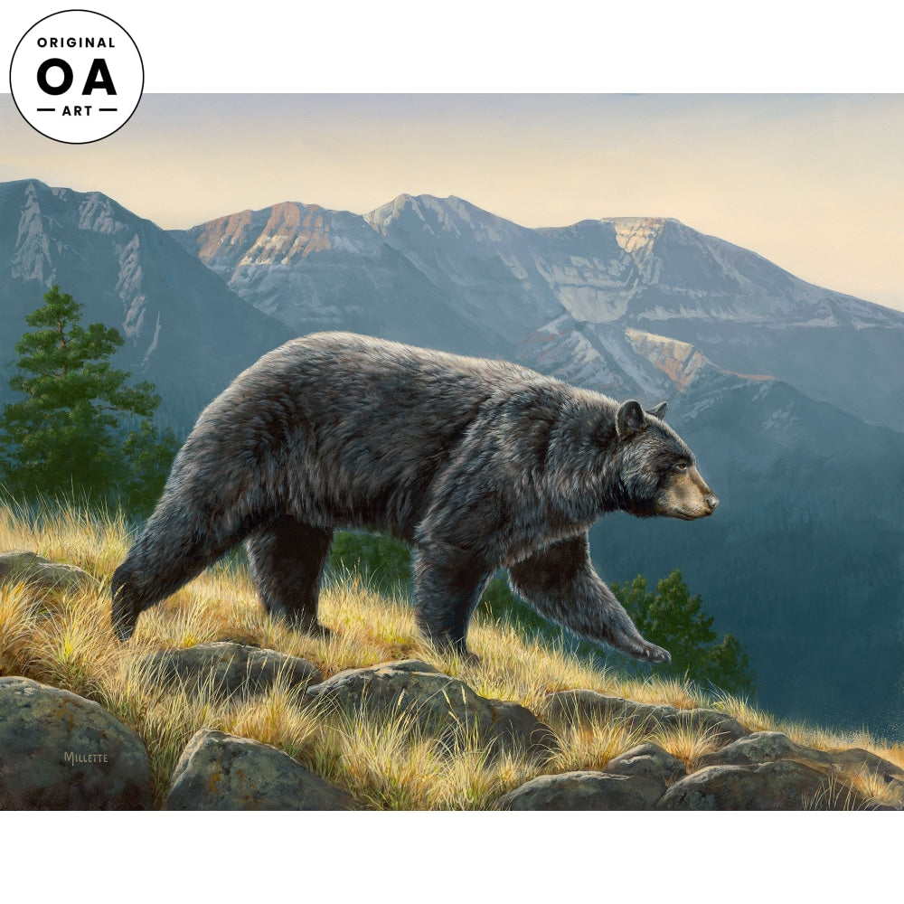 Ridgeline—Black Bear.