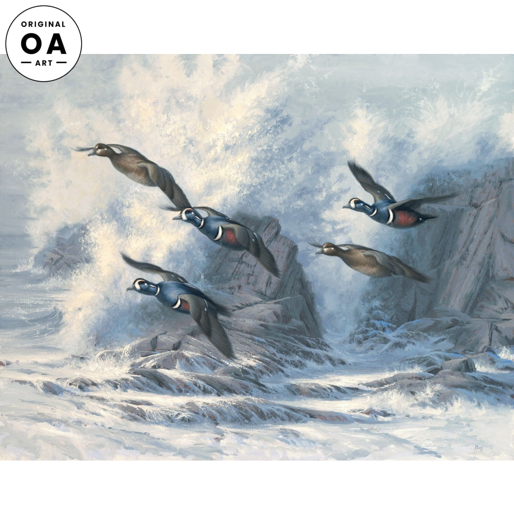 Surf Patrol— Harlequin Ducks.