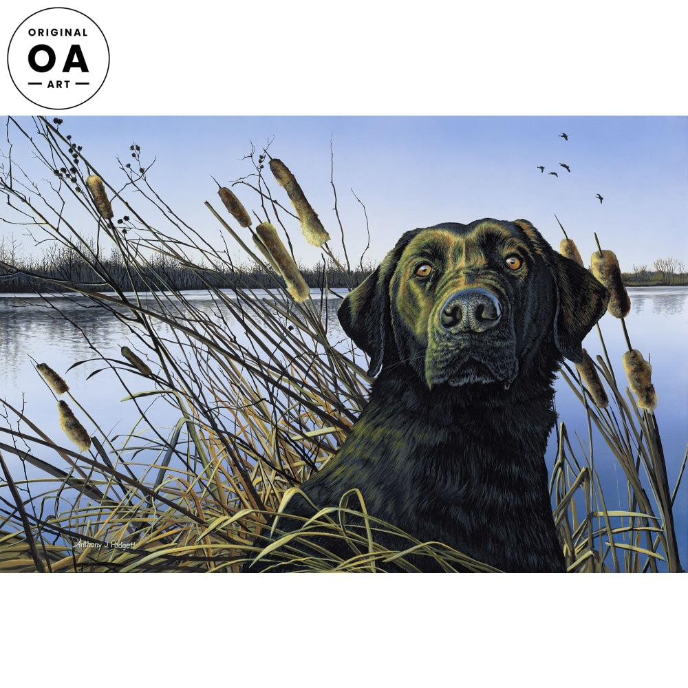 Anticipation—Black Lab with Cattails.