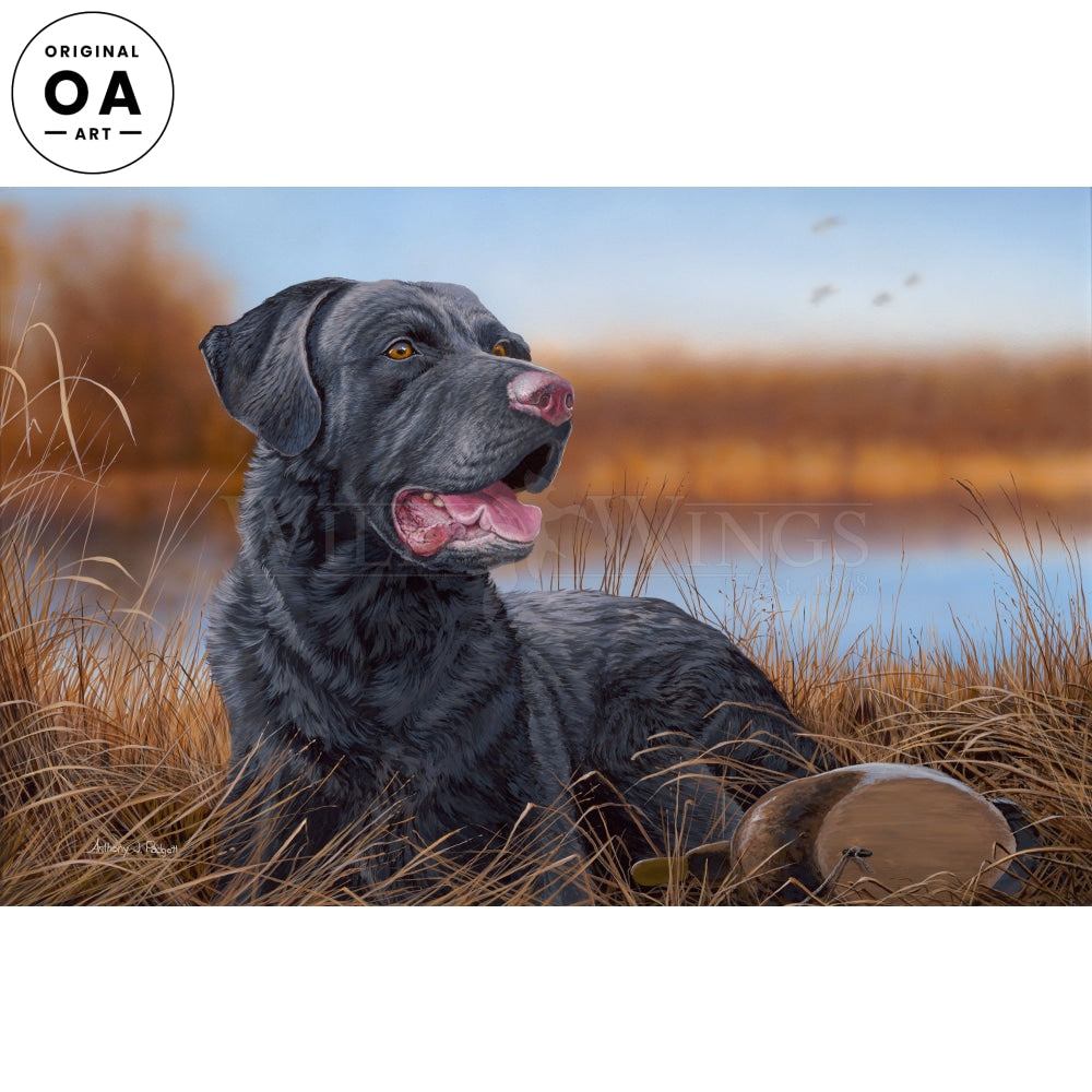 Great Expectation—Black Lab Original Art