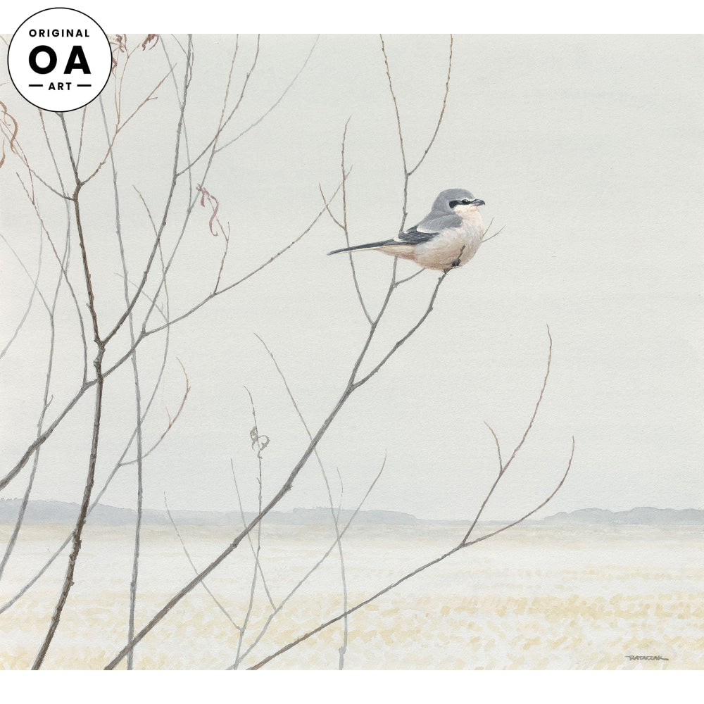Winter Willow—Northern Shrike.