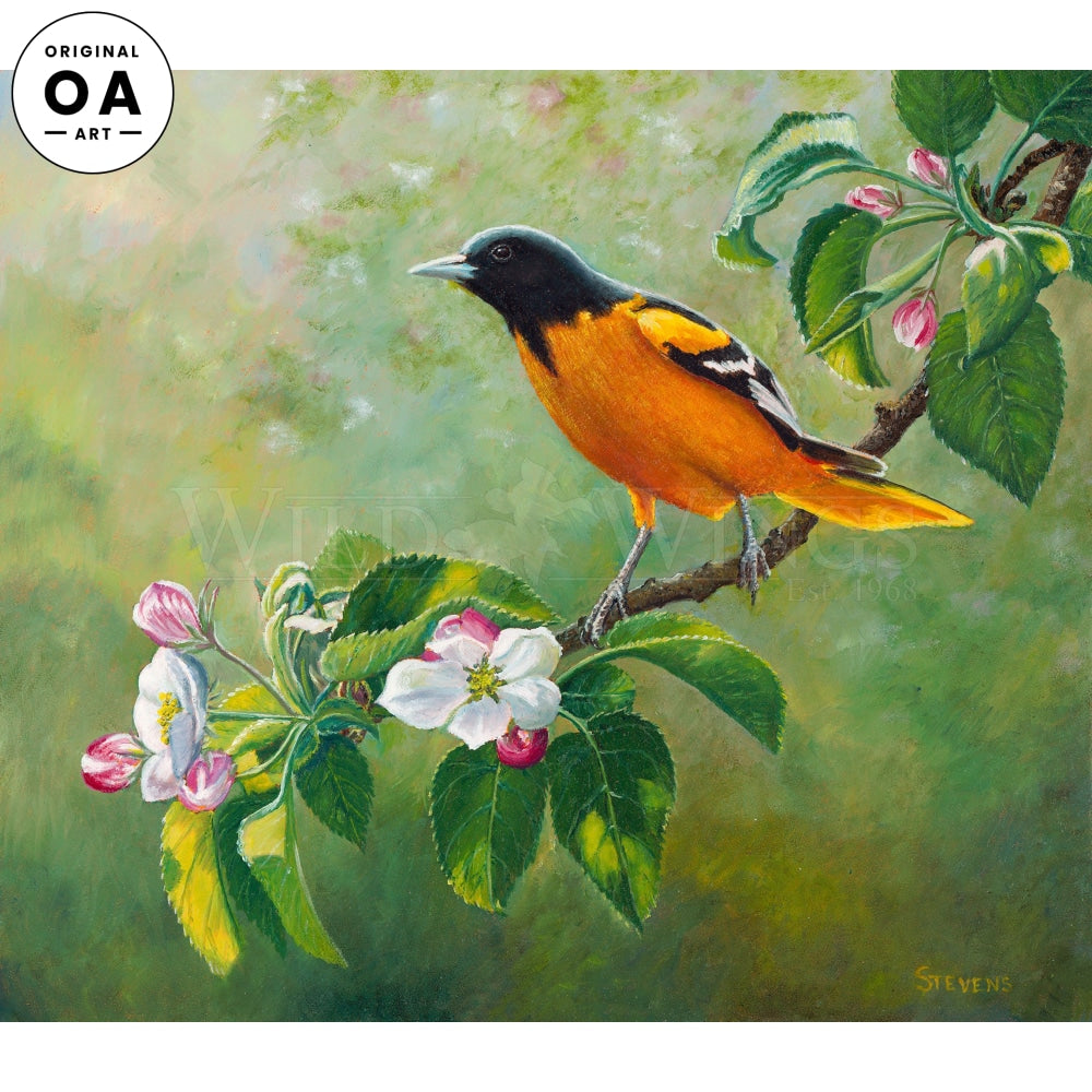 Signs of Spring—Baltimore Oriole.