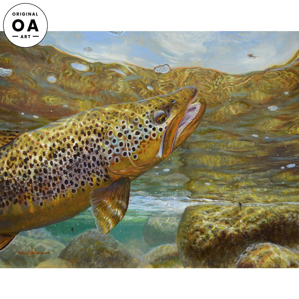 Rising to the Fly—Brown Trout.