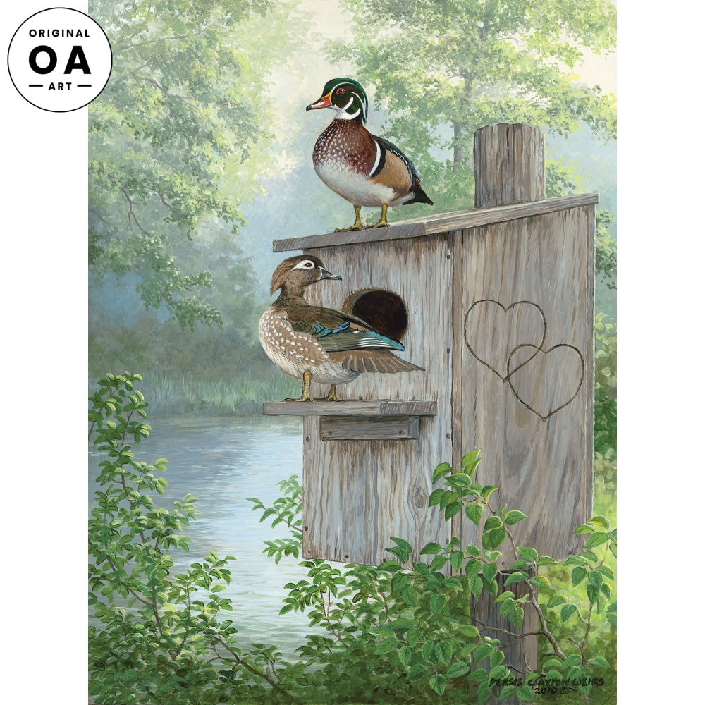 Misty Hideaway—Wood Ducks.