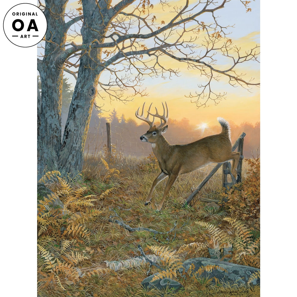 Sunrise Retreat—Whitetail Deer.