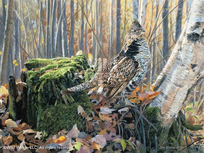 Brief Pose—Ruffed Grouse.