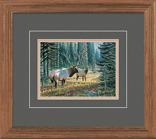 Out From The Shadows&mdash;elk Gna Deluxe Framed Print<Br/>16.5H X 18.5W Art Collection