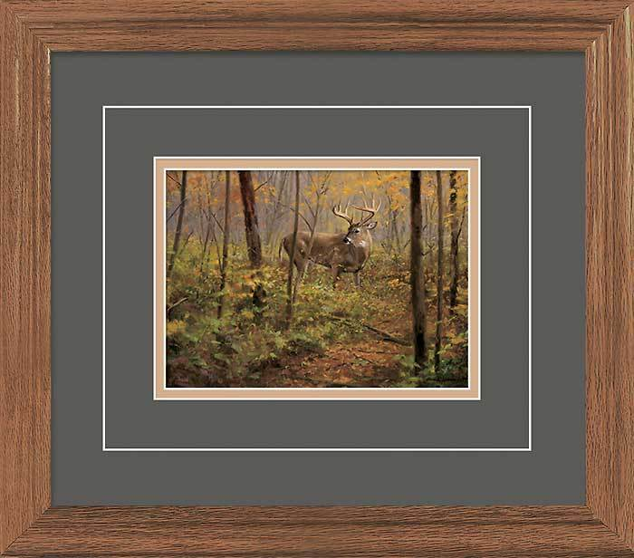 Fall—Whitetail Deer