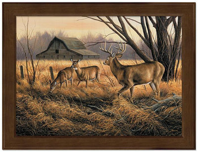 <I>Abandoned Farmstead&mdash;whitetail Deer</i> Framed Studio Canvas<Br/>17H X 22W Art Collection