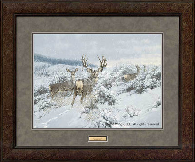 Winter Range—Mule Deer.