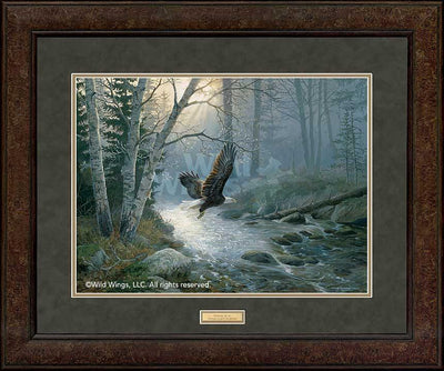 Spring Run-Bald Eagle Art Collection