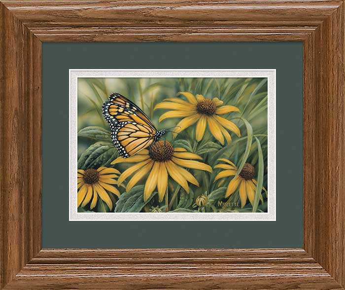 Butterflies Art Collection