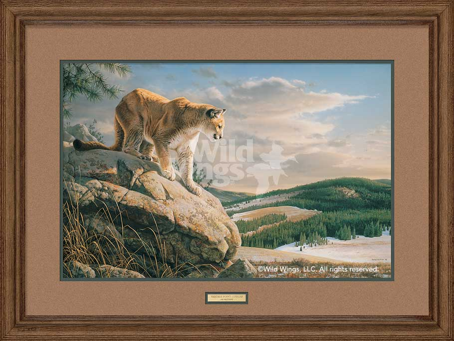 Vantage Point-Cougar Art Collection