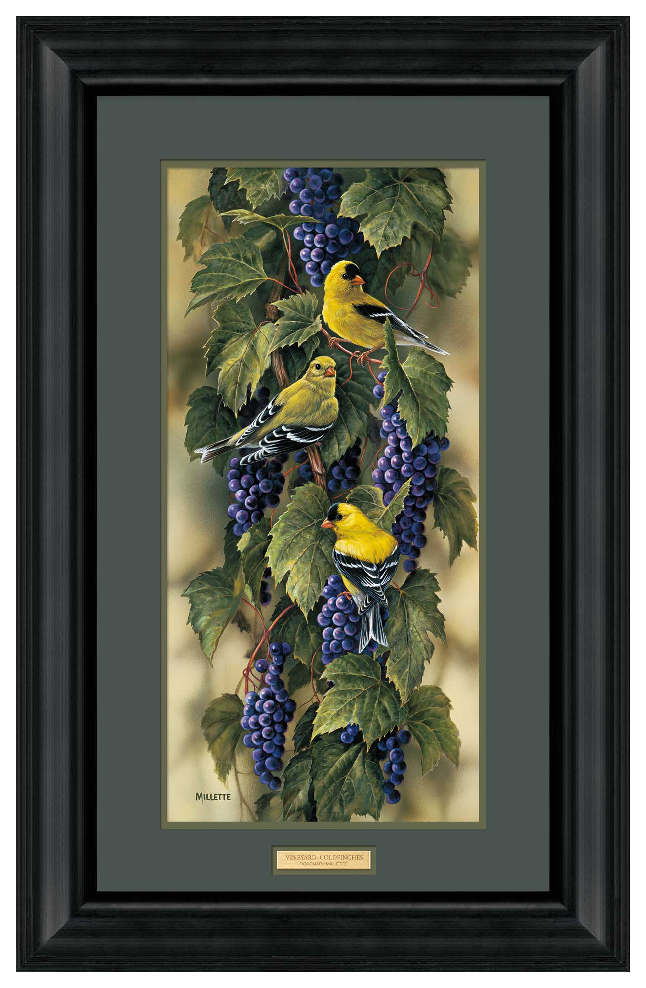 Vineyard—Goldfinch