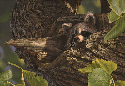 Hiding Place -Raccoon Art Collection