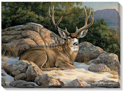 <I>Rocky Outcrop&mdash;mule Deer</i> Wrapped Canvas<Br/>13H X 18W Art Collection