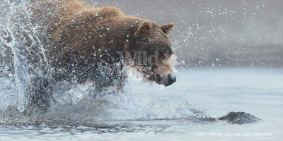 Salmon Run-Brown Bear Art Collection