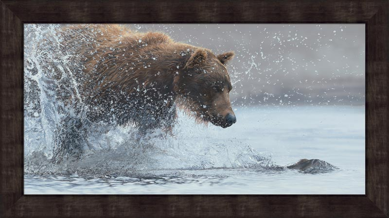 Salmon Run—Brown Bear.