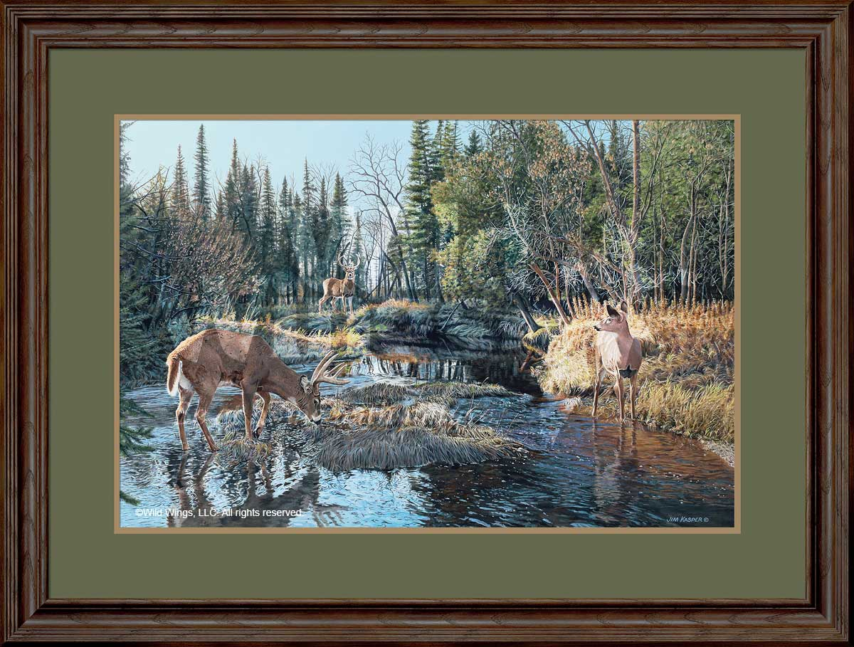 Trespassing-Whitetail Deer Art Collection
