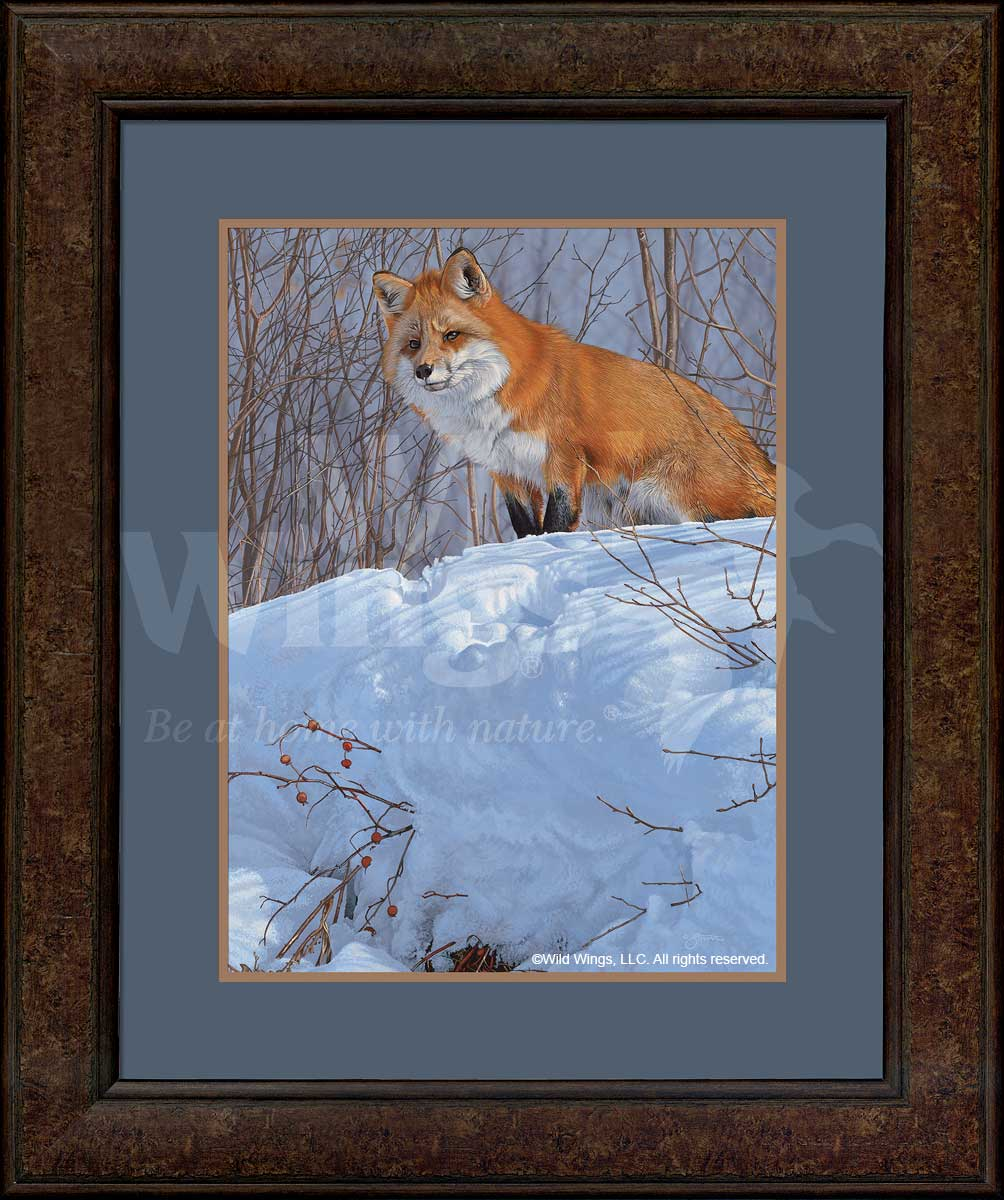 Winter's Red-Fox Art Collection