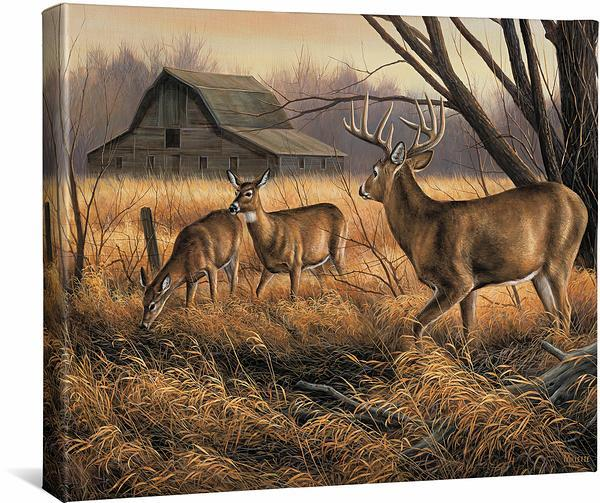 <I>Abandoned Farmstead&mdash;whitetail Deer</i> Gallery Wrapped Canvas<Br/>16H X 20.5W Art