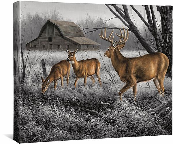 Abandoned Farmstead—Whitetail Deer.
