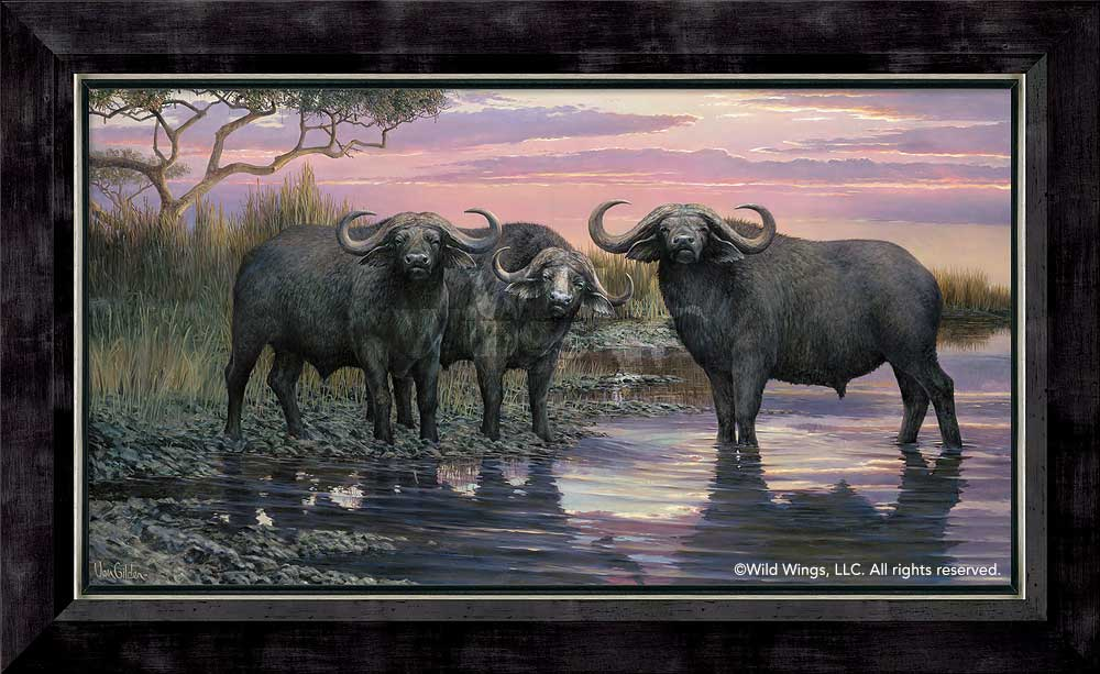 Nightfall—Cape Buffalo.