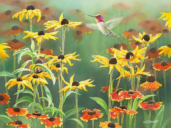 Annas Hummingbird In Blackeyed Susans Print<Br/>12H X 16W Art Collection