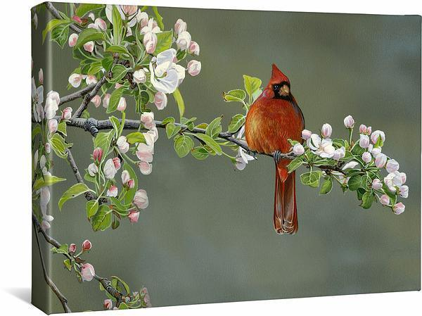 <I>Apple Blossom Crimson&mdash;cardinal</i> Gallery Wrapped Canvas