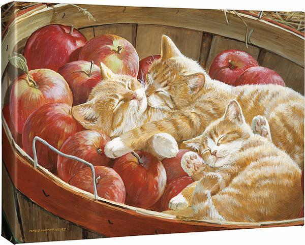 <I>Apples And Oranges&mdash;cats</i> Gallery Wrapped Canvas