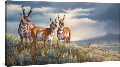 <I>Approaching Storm&mdash;pronghorns</i> Gallery Wrapped Canvas<Br/>18H X 36W Art Collection