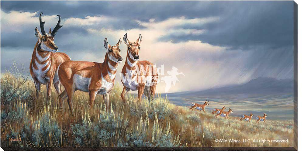 <I>Approaching Storm&mdash;pronghorns</i> Wrapped Canvas<Br/>18H X 36W Art Collection